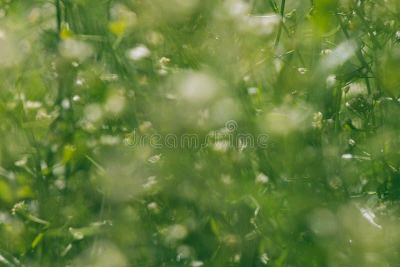 Резюмируйте предпосылку весны нерезкости стоковые фотографии rf