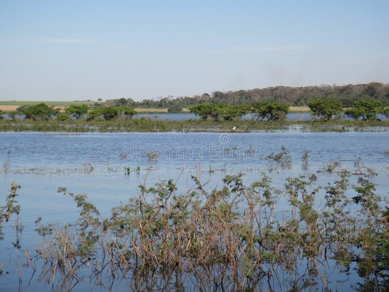 Река - аквариумное растени стоковое изображение rf