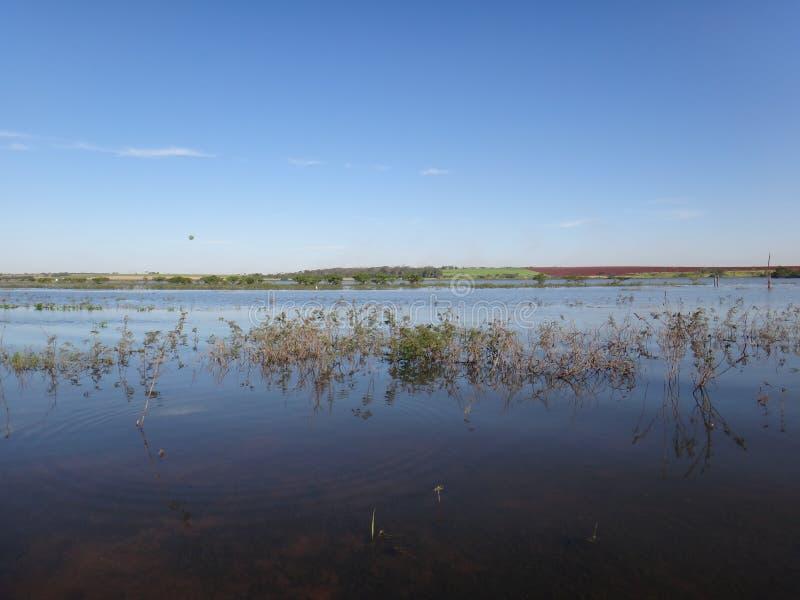 Река - аквариумное растени стоковое фото rf