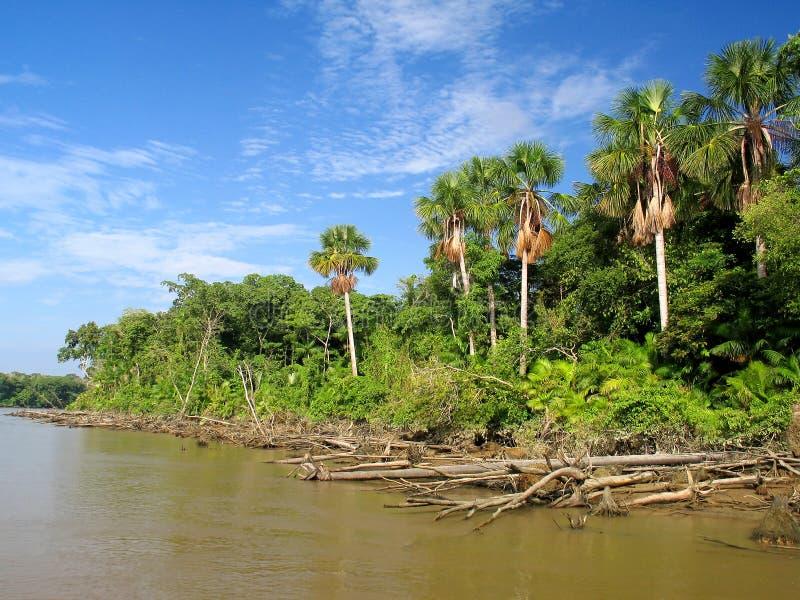 река Амазонкы стоковое изображение