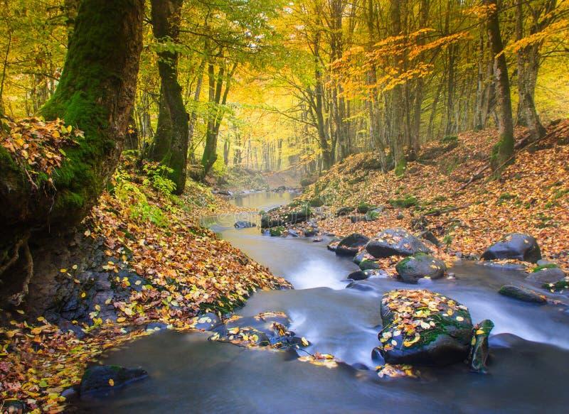 Река ландшафта волшебное в лесе осени стоковые фото