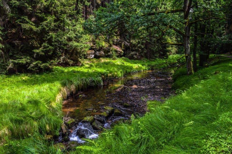 Река бежать через луг стоковое фото