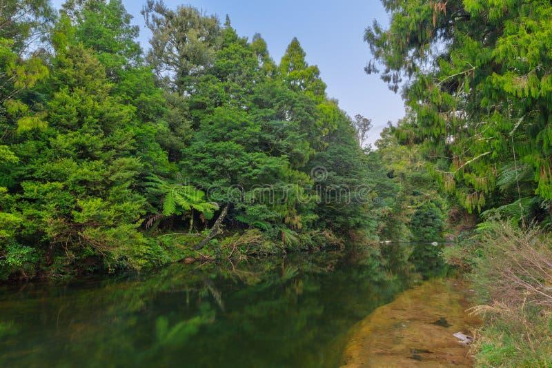 Река бежать через плотный родной лес в Новой Зеландии стоковые фото