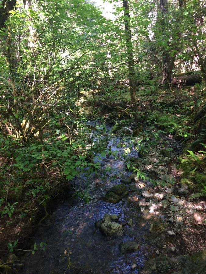 Река воды! Красивый лес стоковая фотография