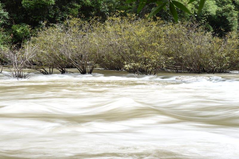Река в глубоком лесе стоковое изображение rf