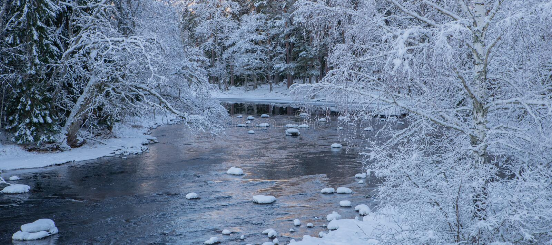 Река в морозном утре стоковые фотографии rf