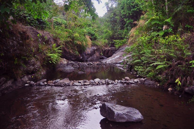 Река в плотном глубоком лесе стоковая фотография rf