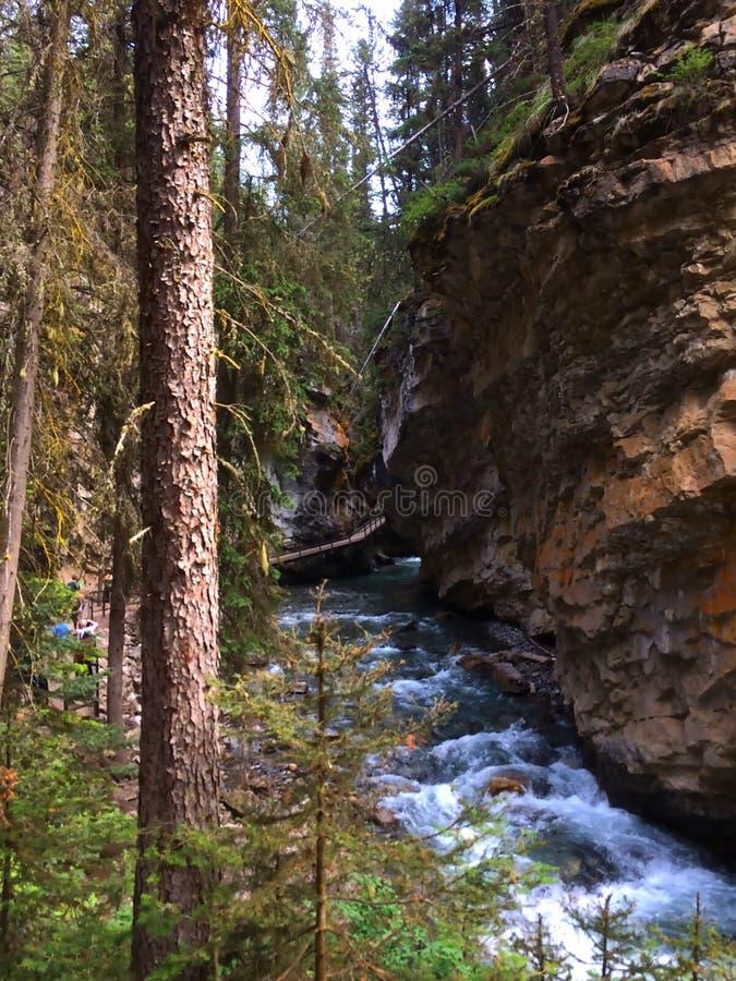 Река в сценарном каньоне Johnston, национальном парке Banff стоковое изображение rf