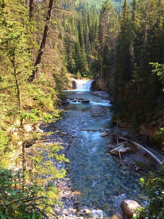 Река в сценарном каньоне Johnston, национальном парке Banff стоковая фотография
