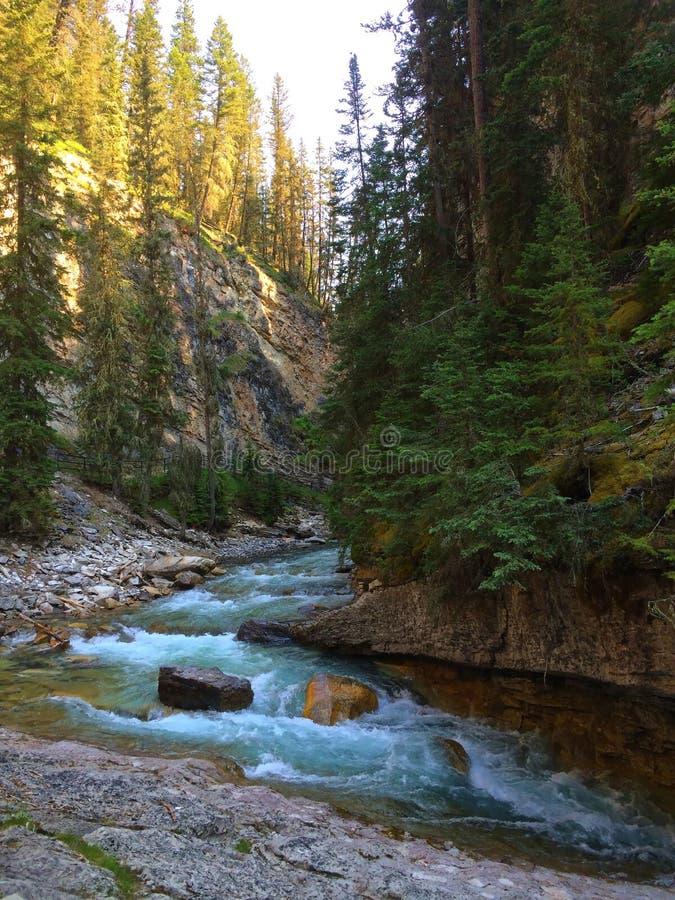 Река в сценарном каньоне Johnston, национальном парке Banff стоковое фото