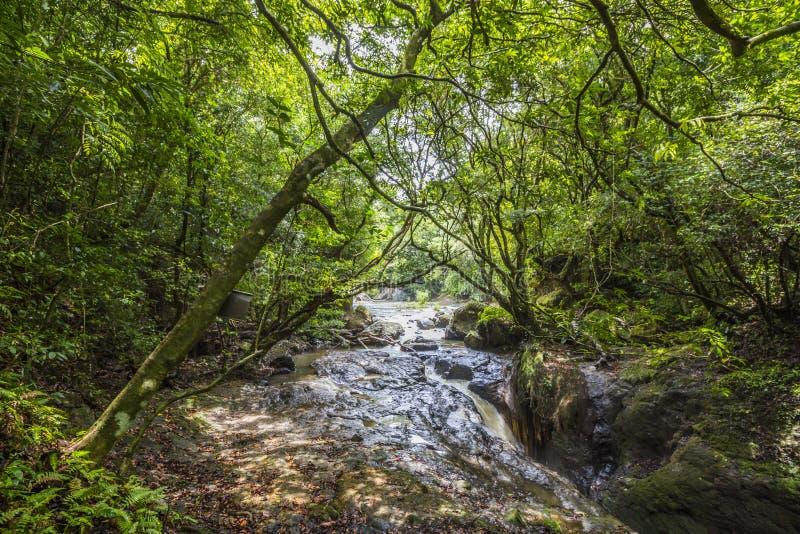 Река в dschungle Панамы стоковые изображения