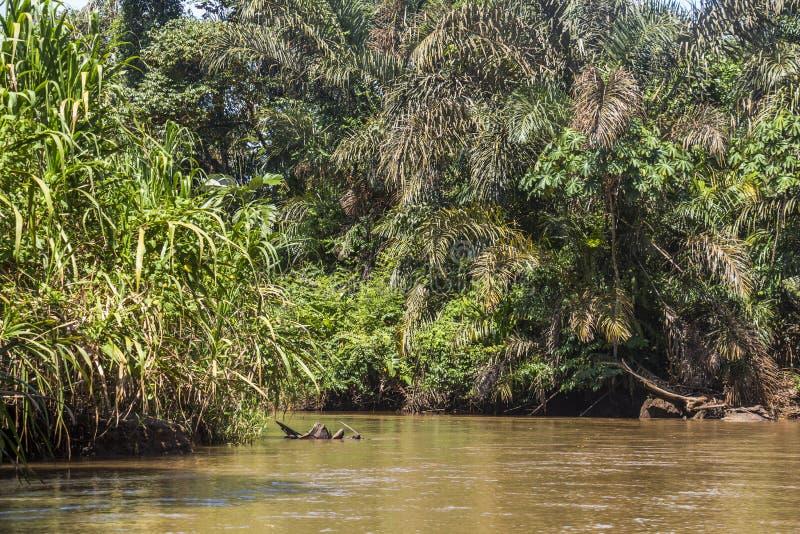 Река в Tortuguero, Коста-Рика стоковое изображение rf