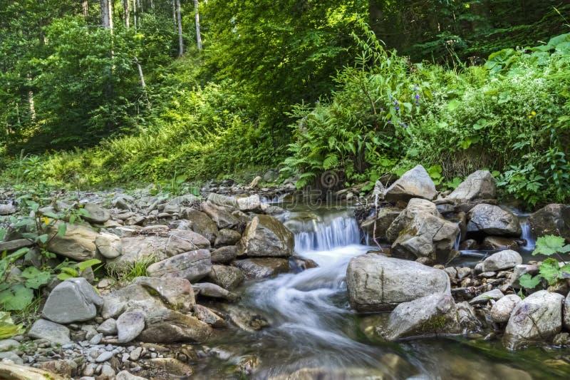 Река горы в прикарпатском лесе стоковое изображение