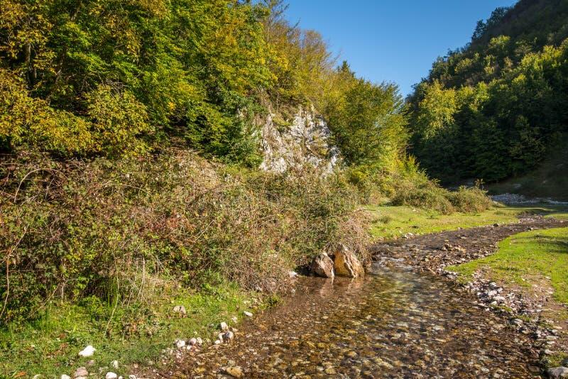 Река горы через леса стоковое изображение
