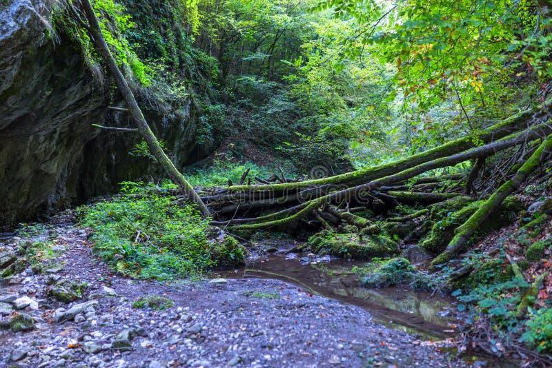 Река горы через леса стоковая фотография rf