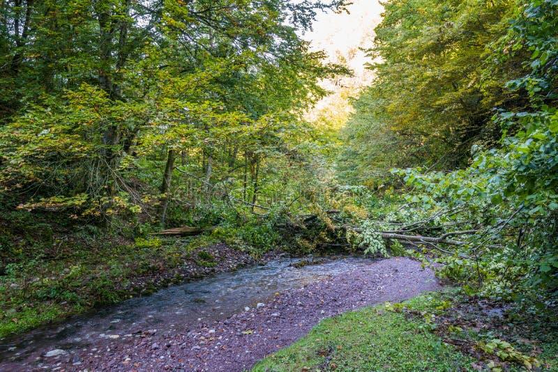 Река горы через леса стоковая фотография