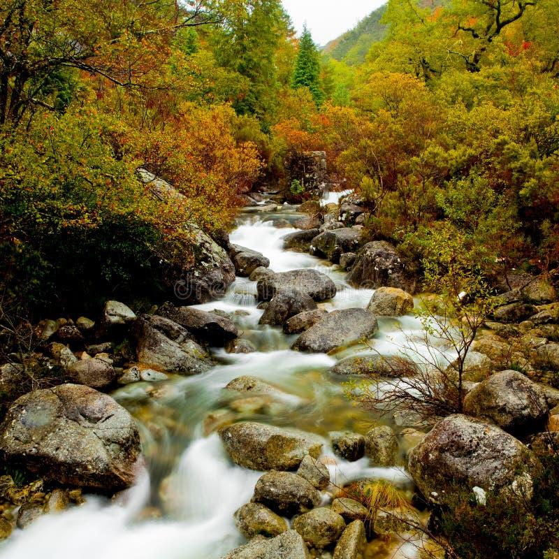 река горы стоковые фото