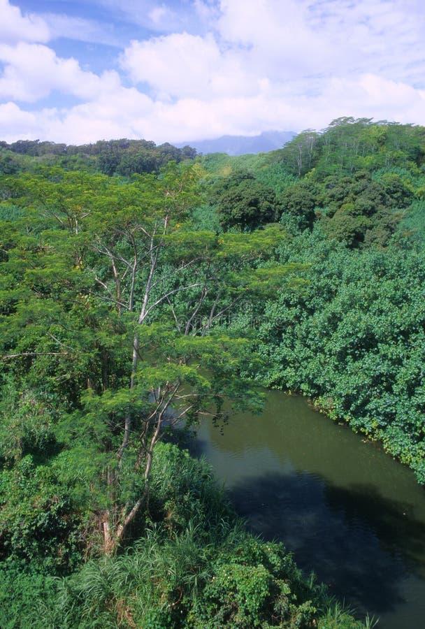 река джунглей стоковая фотография