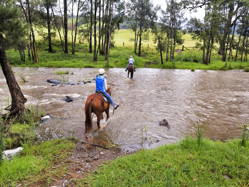 Река езды лошади BTops стоковые фотографии rf