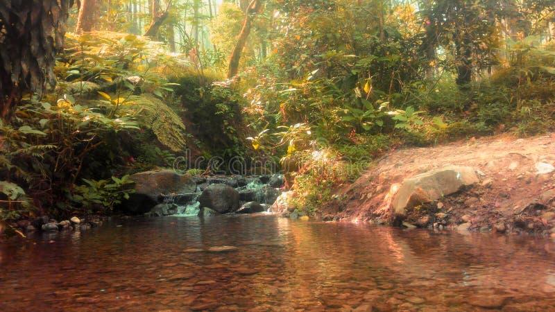 Река леса стоковые изображения