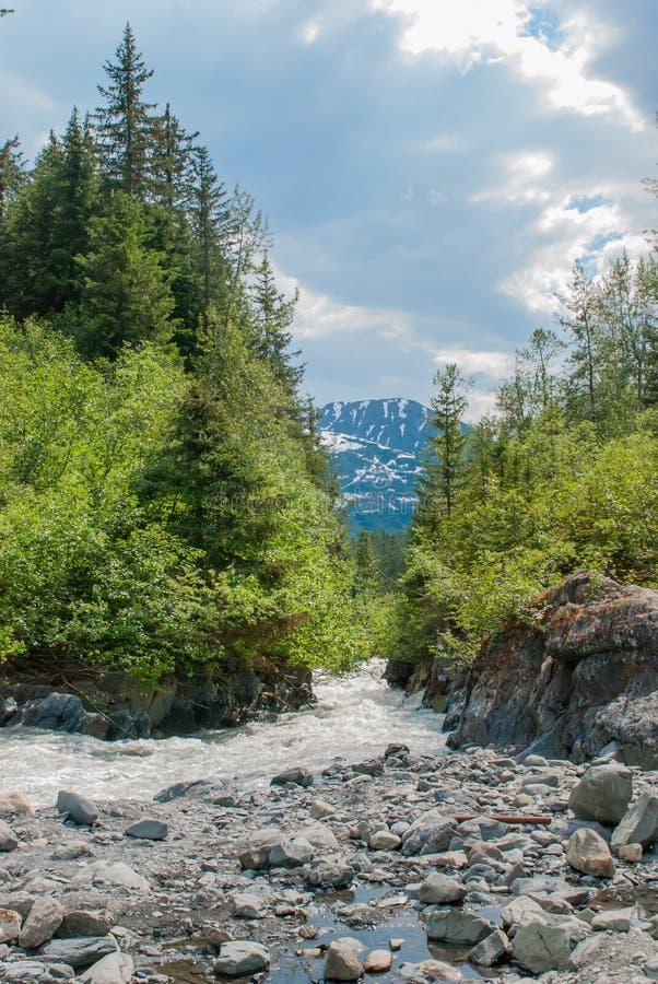 Река заводи вороны стоковое изображение rf