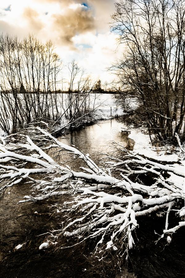 Река зимы холодное пока не замерзало, над рекой покрытое снег дерево висит стоковое изображение