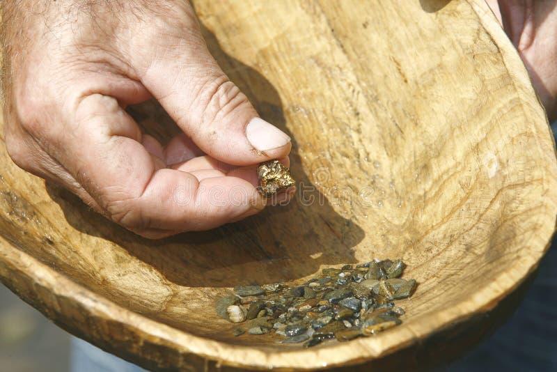 Река золотоискателя держа наггет в деревянном шаре стоковая фотография