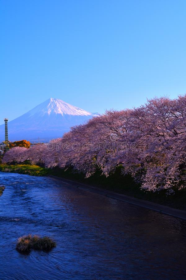 Река и вишневые цвета и Mt Фудзи в городе Японии Фудзи стоковое фото rf