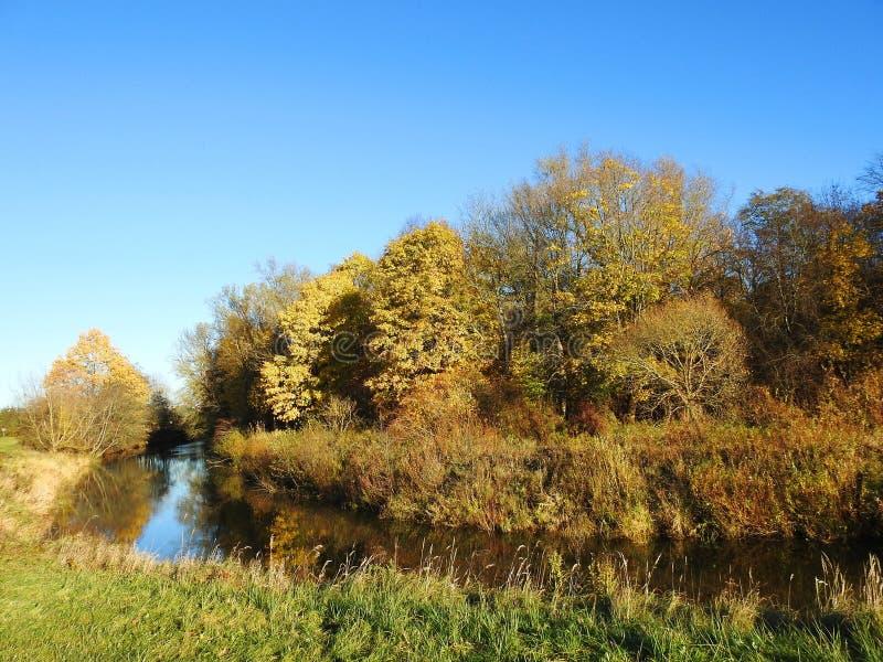 Река и красивые деревья осени, Литва стоковое изображение rf