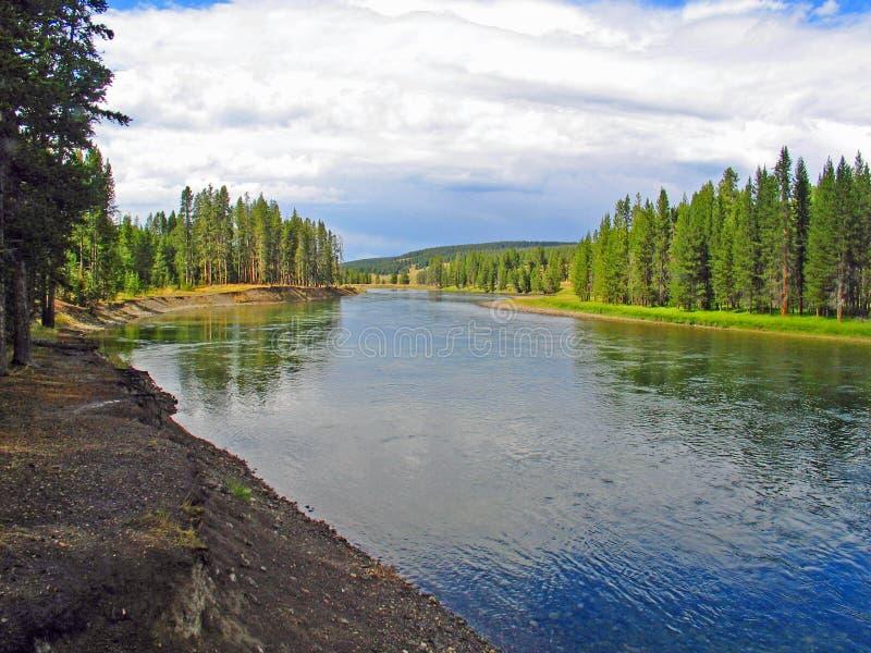 Река Йеллоустоун хотя зеленый луг стоковые фотографии rf
