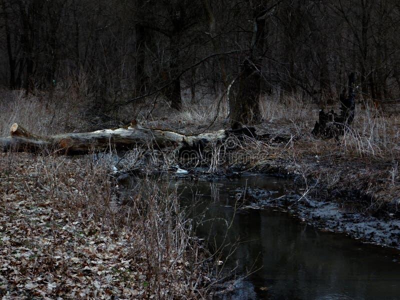 Река леса на сумерк стоковая фотография rf