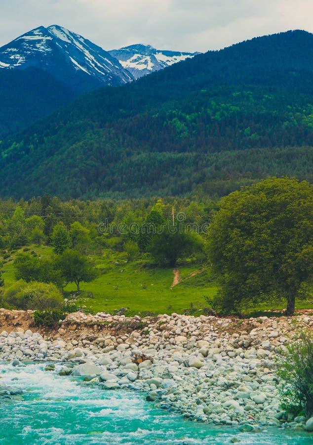 Река леса сосны пропускает через утесы Красивое powerf стоковые изображения
