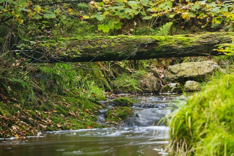 Река осени и упаденное дерево стоковое изображение