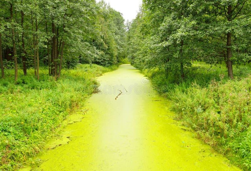 Река перерастанное с duckweed стоковое фото