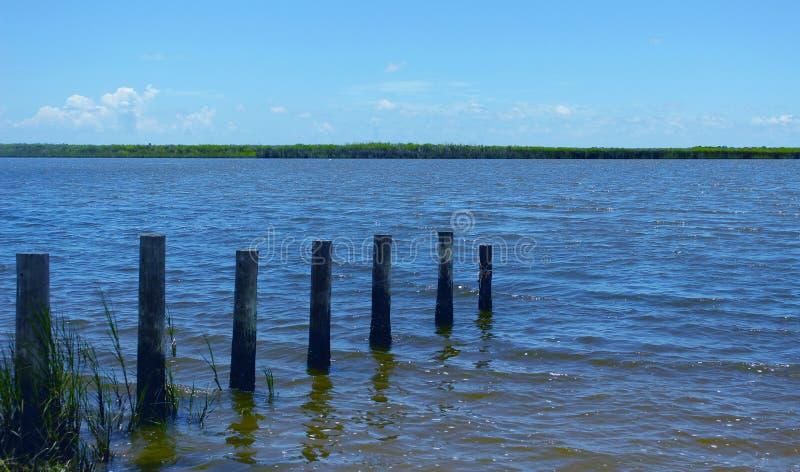 Река показывая деревянные столбы и gass на банках стоковое фото