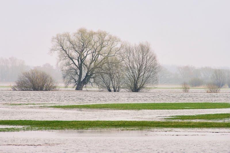 река потока elbe стоковые изображения