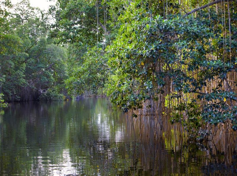 Река пропускает в древесине стоковая фотография rf