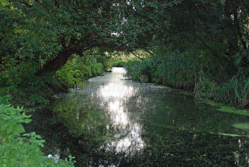 Река пропускает под сенью деревьев стоковое фото rf