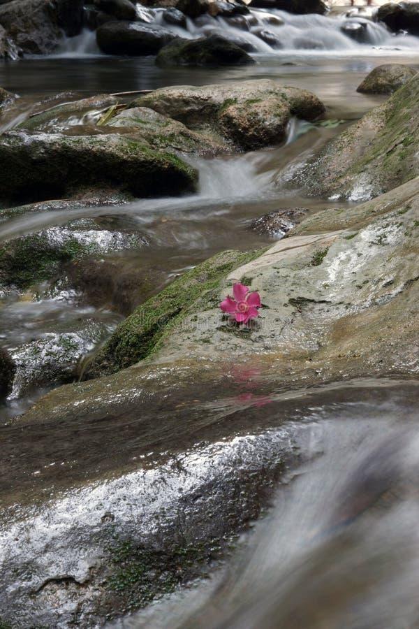 Река пропускает через утесы, цветок олеандра в центре стоковое изображение rf