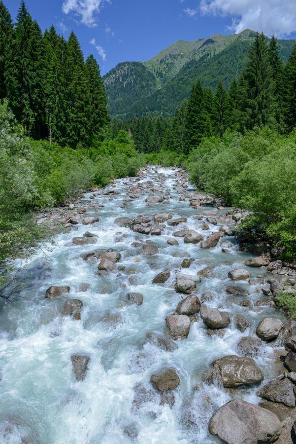 Река пропуская в природном парке Adamello Brenta стоковые изображения rf