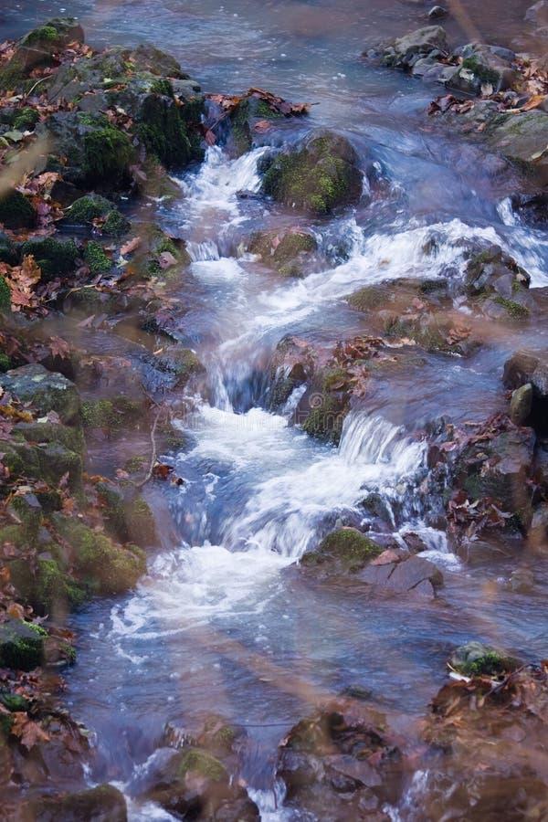 река пущи стоковая фотография rf