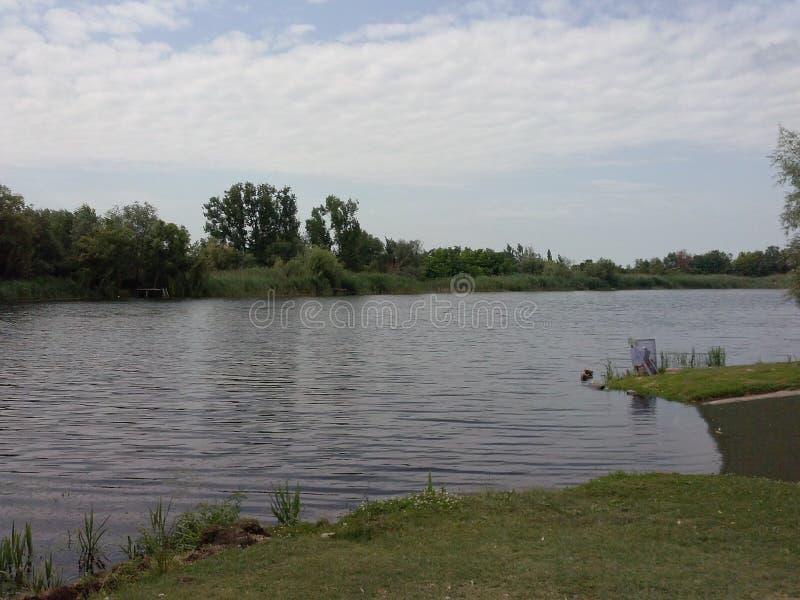 Река рыбной ловли природы дерева tisa Дуная стоковая фотография rf
