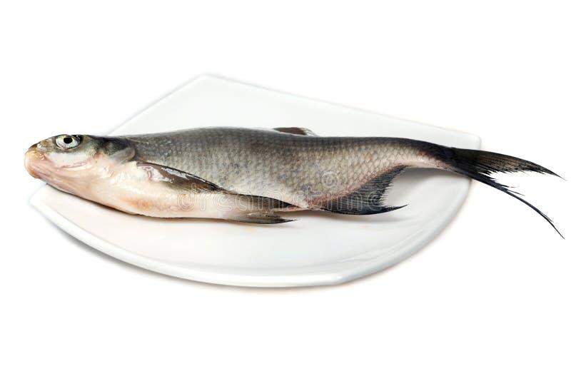 река рыб леща стоковое изображение