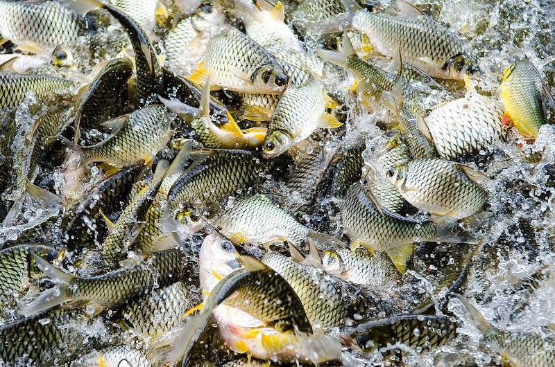 Река рыб стоковые изображения rf
