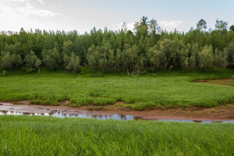 Река сушит вверх в Taiga стоковые фото
