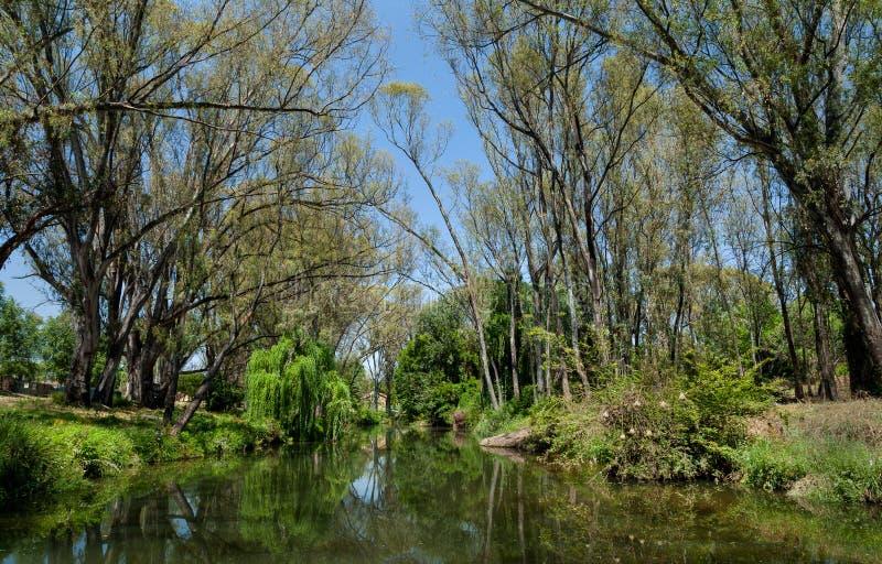 Река сфотографированное в Йоханнесбурге стоковые фото
