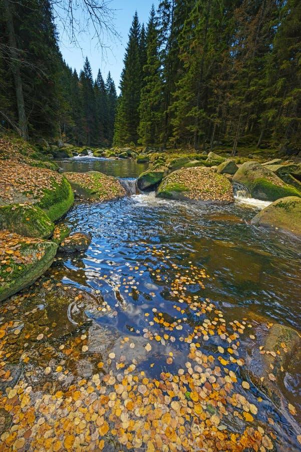Река с желтой листвой осени стоковое фото rf