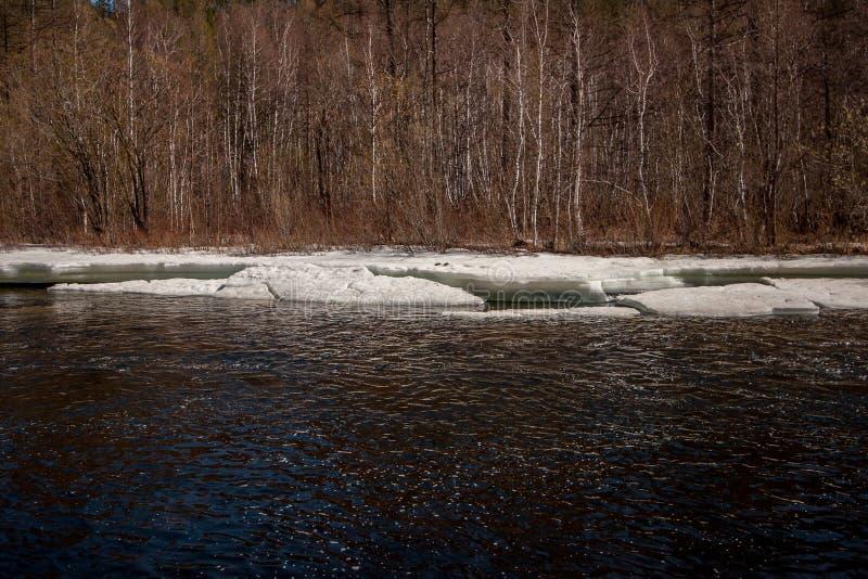 Река с льдом весной с деревьями на заднем плане стоковое фото rf
