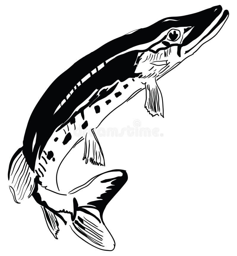 Река хищника Pike бесплатная иллюстрация