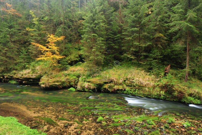 Река цветов осени стоковое изображение